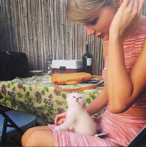 taylor swift cat