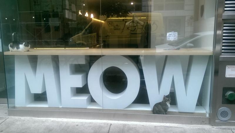 meow 3