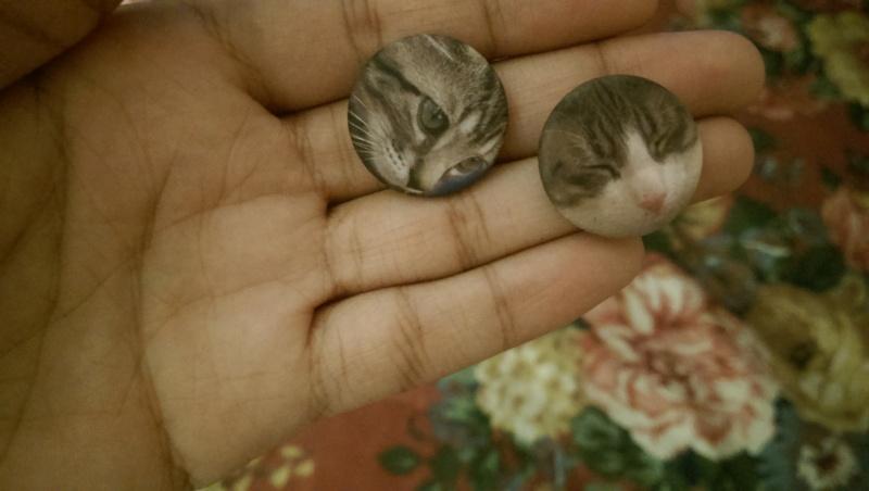 meow 6